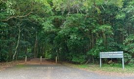 The Glade picnic area, Dorrigo National Park. Photo: Rob Cleary