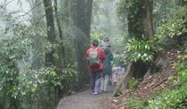A family walking along the Lyrebird Link walking track.