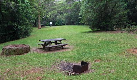Never Never picnic area, Dorrigo National Park. Photo: Rob Cleary