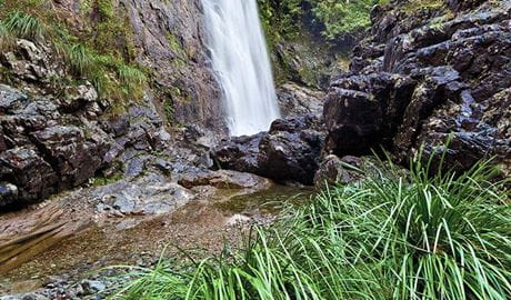Red Cedar Falls walking track, Dorrigo National Park. Photo: Rob Cleary