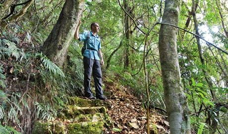 Rosewood Creek walking track, Dorrigo National Park. Photo: Rob Cleary
