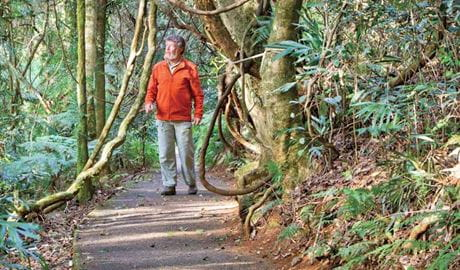 Satinbird stroll, Dorrigo National Park. Photo: Rob Cleary
