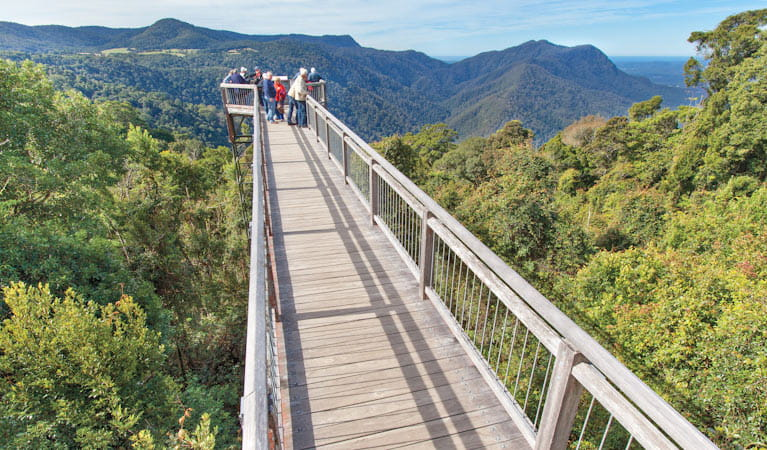 Skywalk lookout, Dorrigo National Park. Photo: Rob Cleary © DPIE