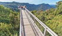 Skywalk lookout, Dorrigo National Park. Photo: Rob Cleary