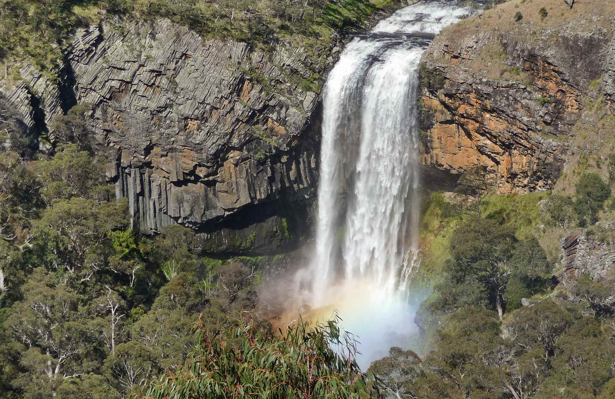 Waterwall Way scenic drive, Dorrigo National Park. Photo: Barbara Webster