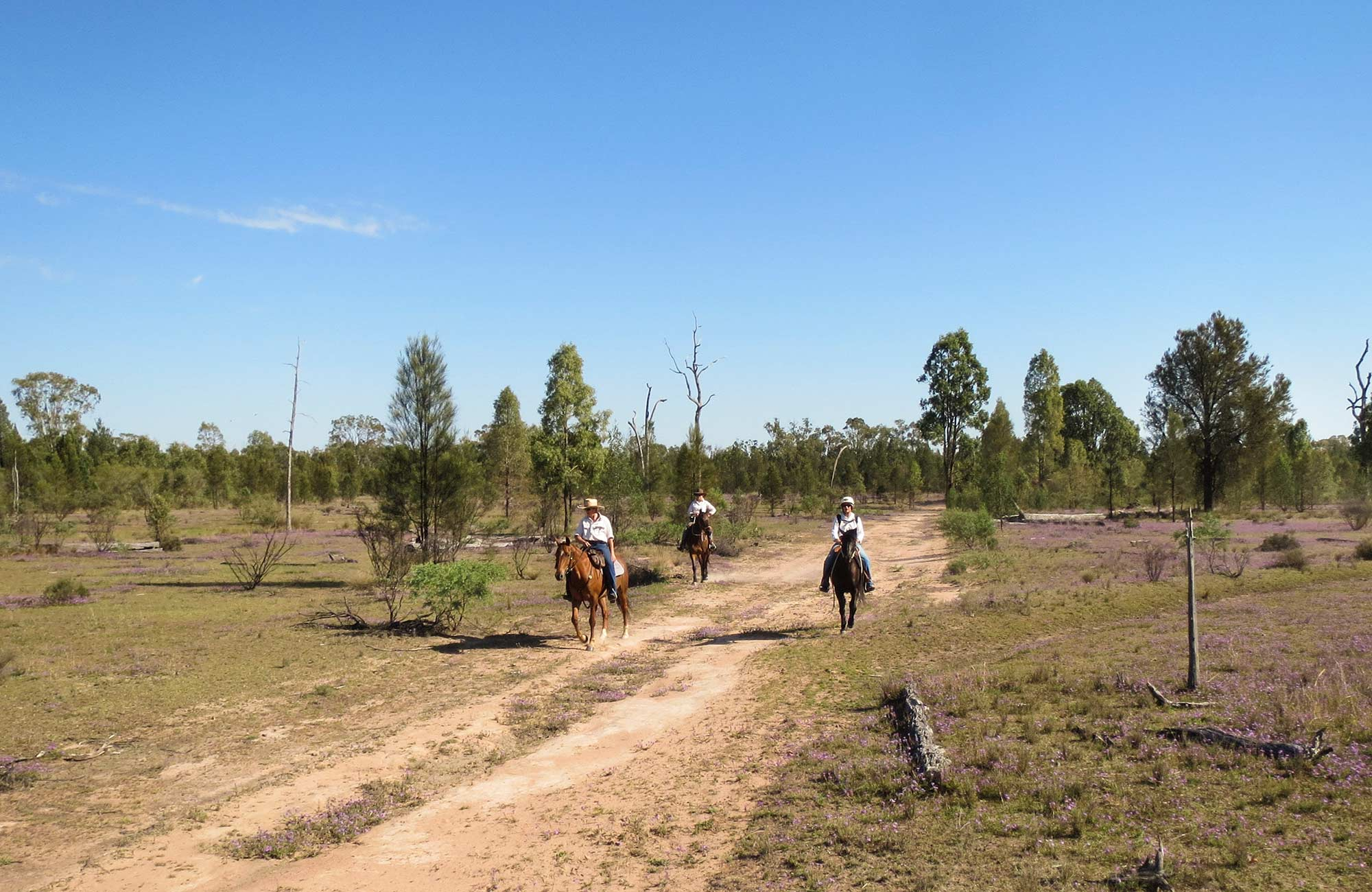 Horse riding trails, Dthinna Dthinnawan National Park. Photo: Michael Lieberman