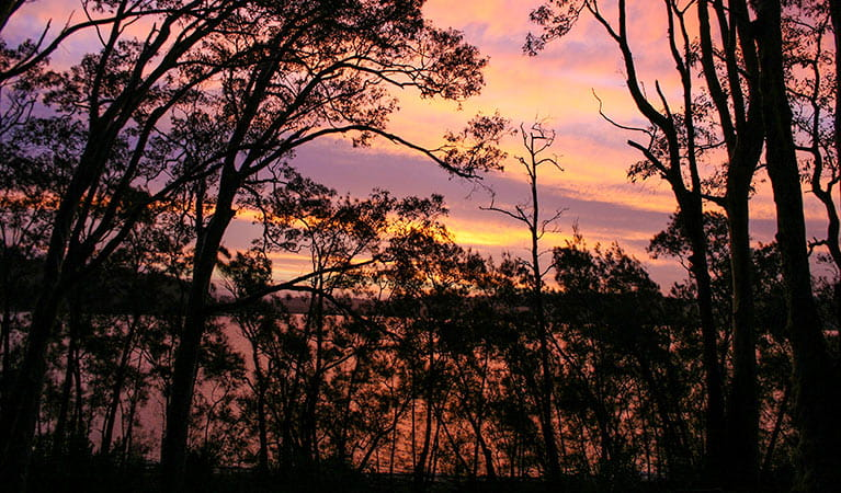 Sunset over Eurobodalla National Park. Photo: Dina Bullivant