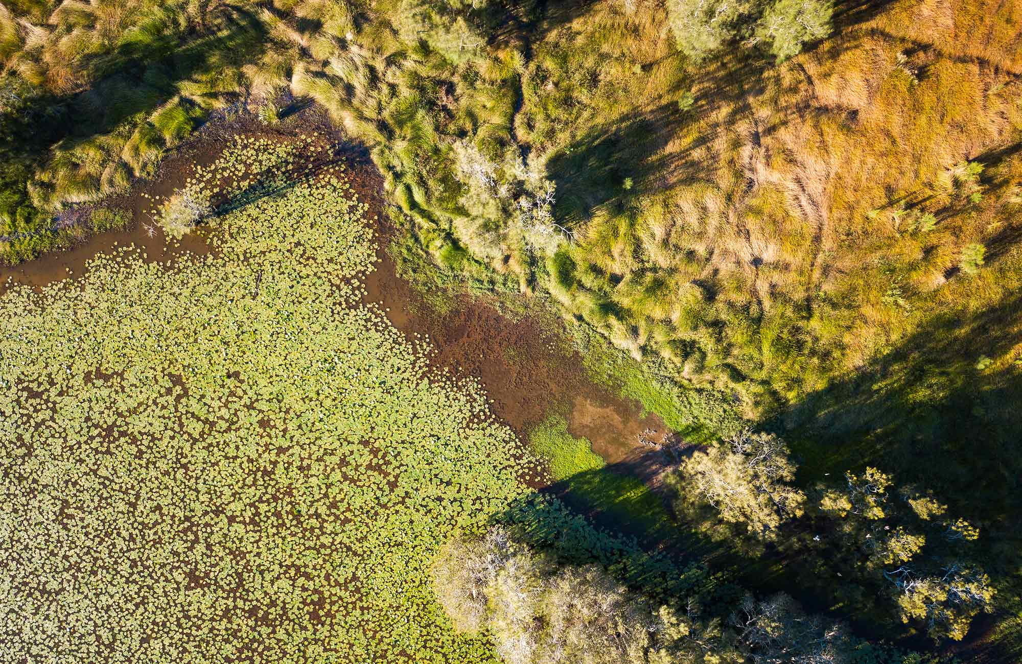 Bird's eye view of the Everlasting Swamp wetland. Photo: John Spencer/OEH