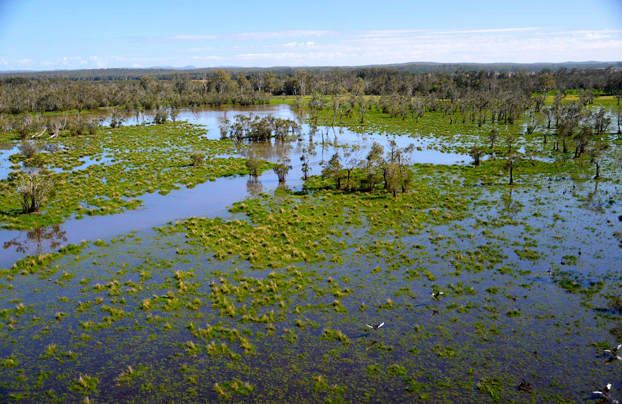 Everlasting Swamp after flooding. Photo: L Orel/OEH