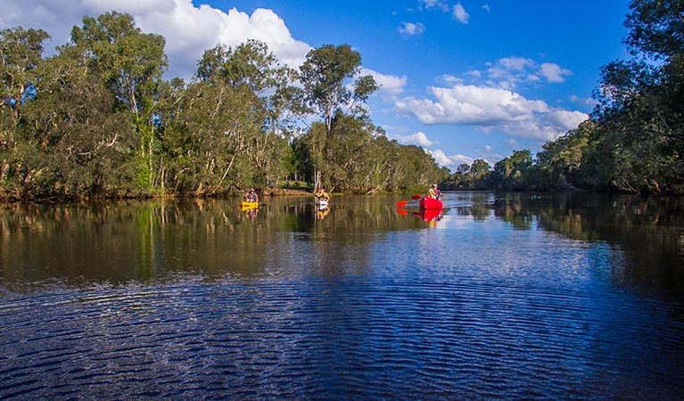 Kayaking down the tree-lined Sportsmans Creek in Everlasting Swamp National Park. Photo: Jessica Robertson/OEH