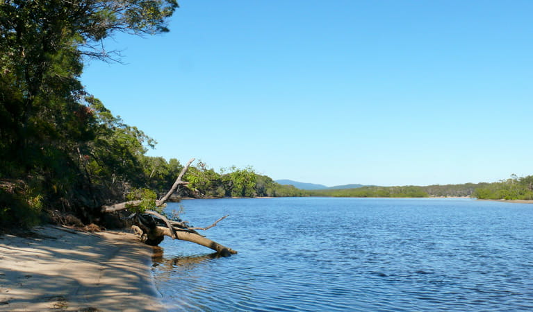Warrell Creek, Gaagal Wanggaan (South Beach) National Park. Photo: A Ingarfield