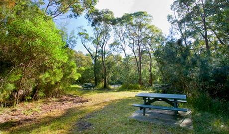 Kellys Falls picnic area, Garawarra State Conservation Area. Photo: Nick Cubbin