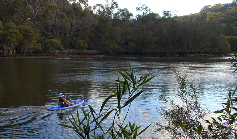 Kayak up Middle Harbour Creek in Garigal National Park. Photo: Natasha Webb/OEH