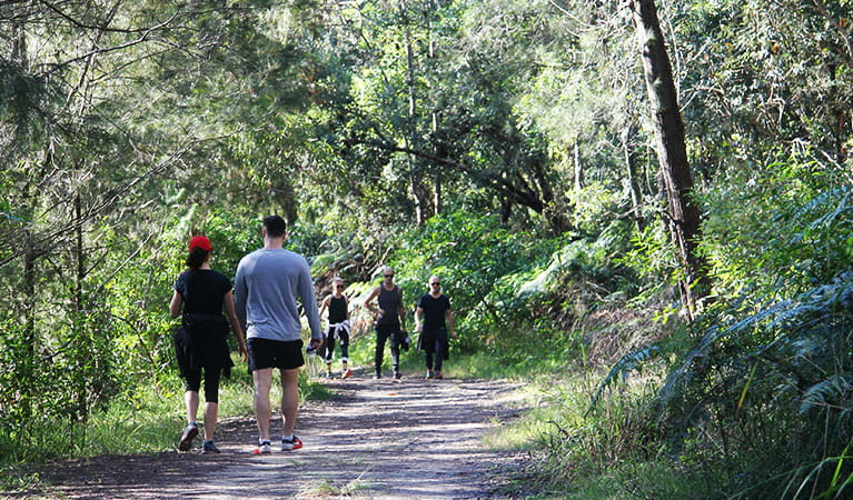 Walkers on Lyrebird trail in Garigal National Park. Photo: OEH/Natasha Webb