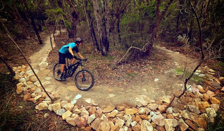 Gahnia And Serrata Mountain Bike Trails Nsw National Parks