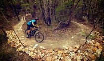 Mountain bike rider on Serrata trail, Garigal National Park. Photo: Flow Mountain Bike