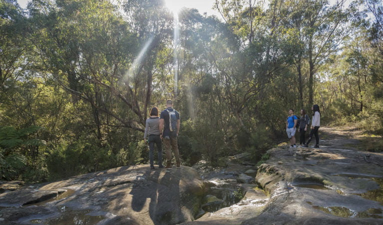 A group of friends bushwalking on the Cascades trail in Garigal National Park. Photo: John Spencer/OEH