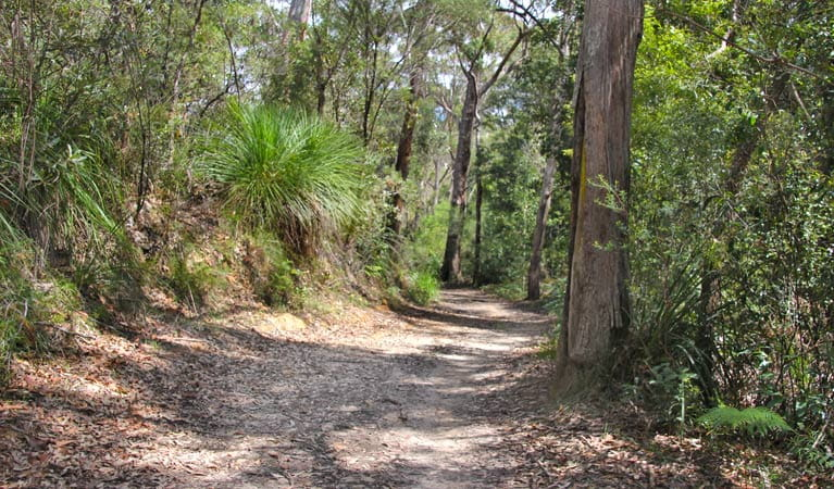 Heath and Bare Creek trails, Garigal National Park. Photo: Kim McClymont/NSW Government