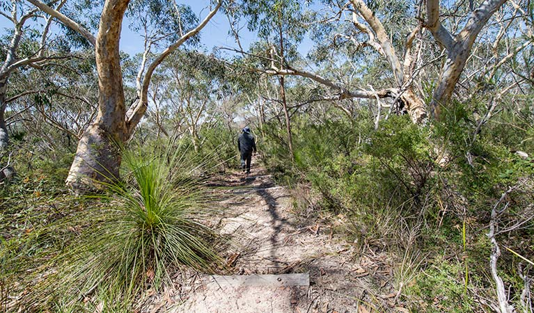 Pipeline and Bungaroo tracks to Stepping Stones Crossing, Garigal National Park. Photo: John Spencer