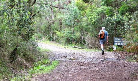 Stepping Stone Crossing to Cascades trail, Garigal National Park. Photo: Shaun Sursok