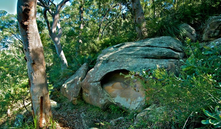 Ridge walking track, Georges River National Park. Photo: John Spencer