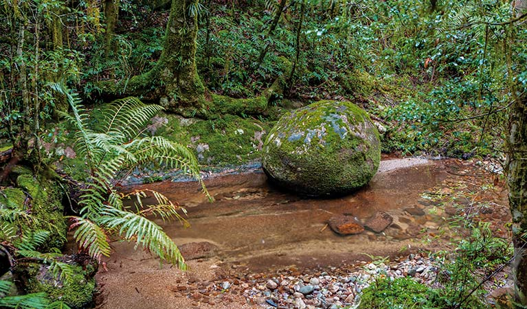 Murrumbooee Cascades walking track, Gibraltar Range National Park. Photo: Rob Cleary / Seen Australia