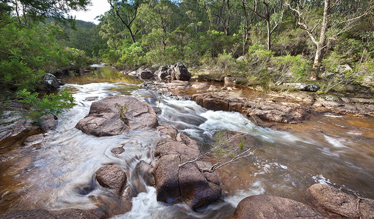 Little Dandahra Creek walking track, Gilbraltar Range National Park. Photo: Rob Cleary