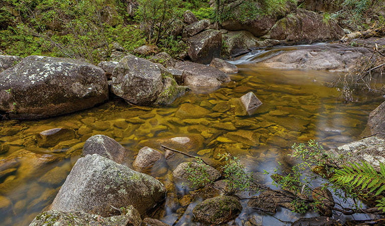 Murrumbooee Cascades walking track, Gibraltar Range National Park. Photo: Rob Cleary
