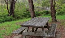 Platypus picnic area, Gibraltar Range National Park. Photo: Rob Cleary