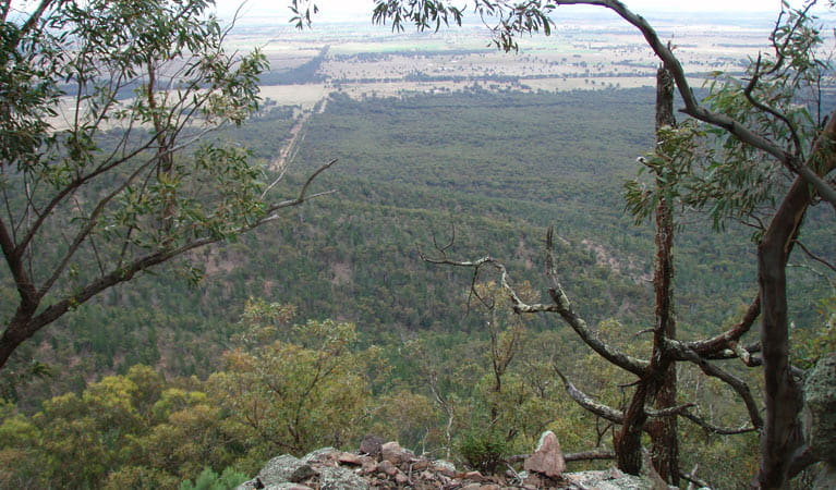 Burrabadine walking track view, Goobang National Park. Photo: A Lavender