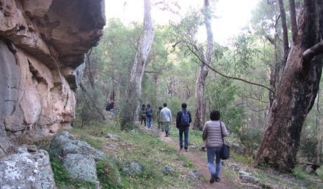 Walkers set off on The Drip walking track. Photo: Greg Lowe/NPWS