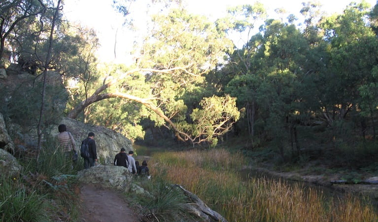 Walkers in single file head down to the creek on The Drip walking track. Photo: Greg Lowe/NPWS