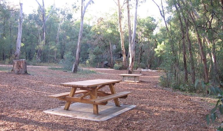 The Drip's spacious picnic area, with picnic tables and surrounding gums and other trees. Photo: Greg Lowe/NPWS