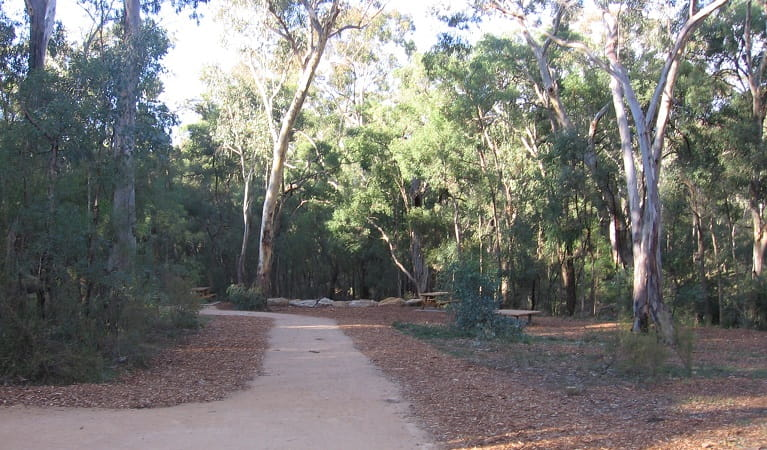 Path leading from the carpark at the start of The Drip walking track. Photo: Greg Lowe/NPWS