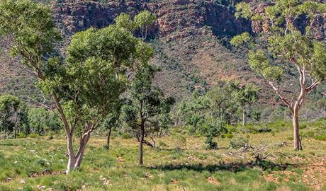nnetts Gorge picnic area, Gundabooka National Park. Photo: John Good