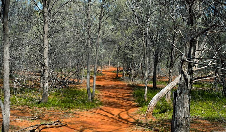 Path of red soil through dry woodland in Gundabooka National Park. Photo credit: Leah Pippos © DPIE
