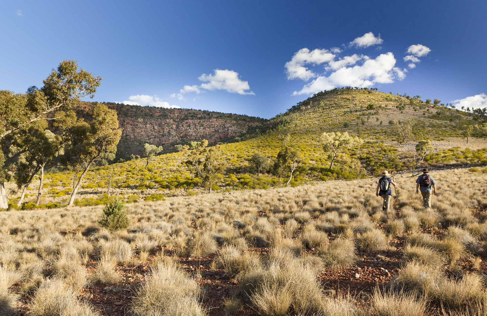 Little Mountain walking track, Gundabooka National Park. Photo: David Finnegan