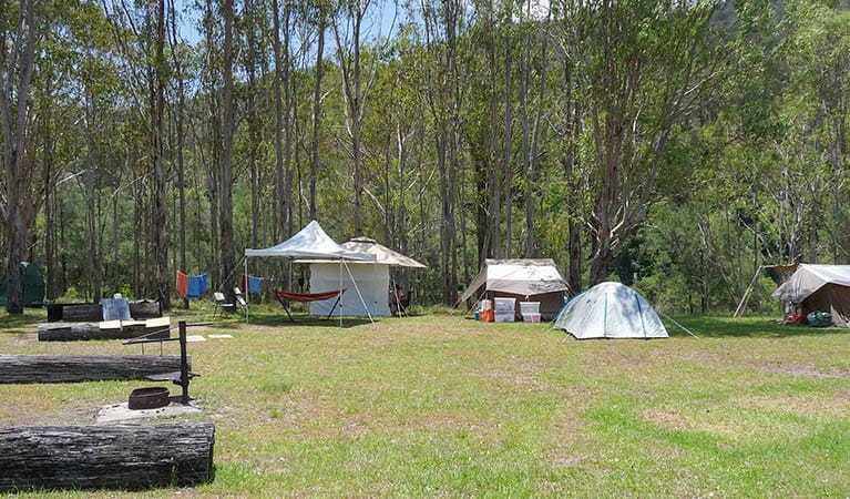Dalmorton campground, Guy Fawkes River National Park. Photo: Richard Ghamraoui