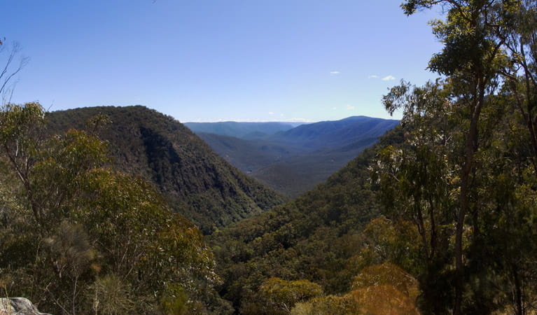 Escarpment Walk, Guy Fawkes River National Park. Photo: Barbara Webster/NSW Government