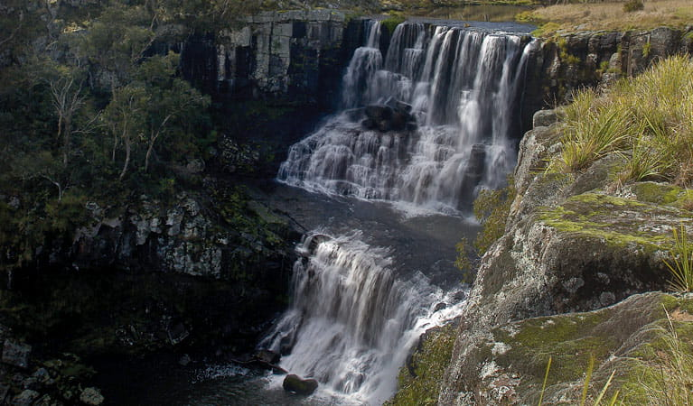 Ebor Falls, Guy Fawkes River National Park. Photo:Michael Van Ewijk/OEH/NSW Government