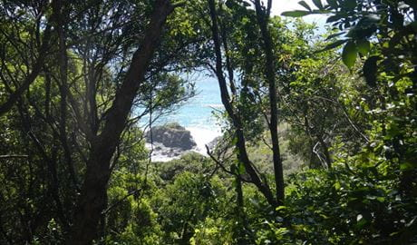 View through the trees from the Rainforest track. Photo: Debby McGerty