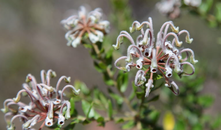 Bullawarring walking track, Heathcote National Park. Photo: Nick Cubbin