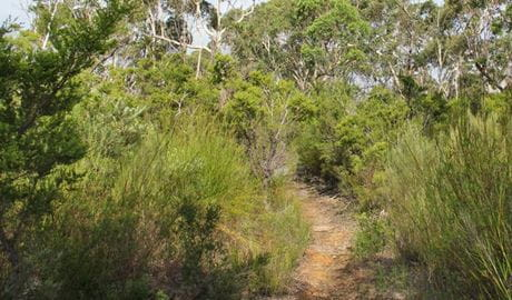 Mooray walking track, Heathcote National Park. Photo: John Yurasek