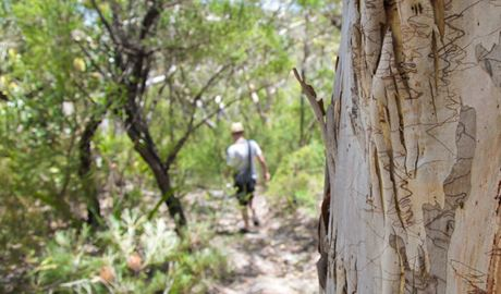 Mooray walking track, Heathcote National Park. Photo: Andrew Richards