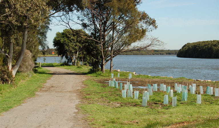 Scotts Point Way to Riverside Park, Hunter Wetlands National Park. Photo: Susan Davis/NSW Government