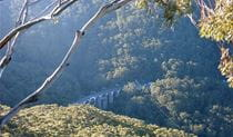 Rainforest and bridge, Illawarra Escarpment State Conservation Area. Photo: NSW Government