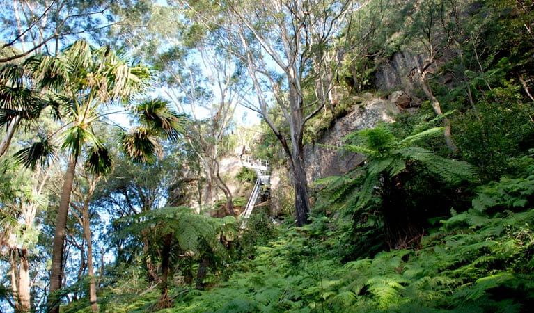 Fern path, Illawarra Escarpment State Conservation Area. Photo: NSW Government