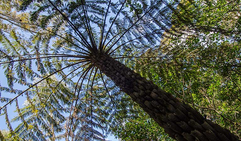 Shelter tree, Illawarra Escarpment State Conservation Area. Photo: John Spencer