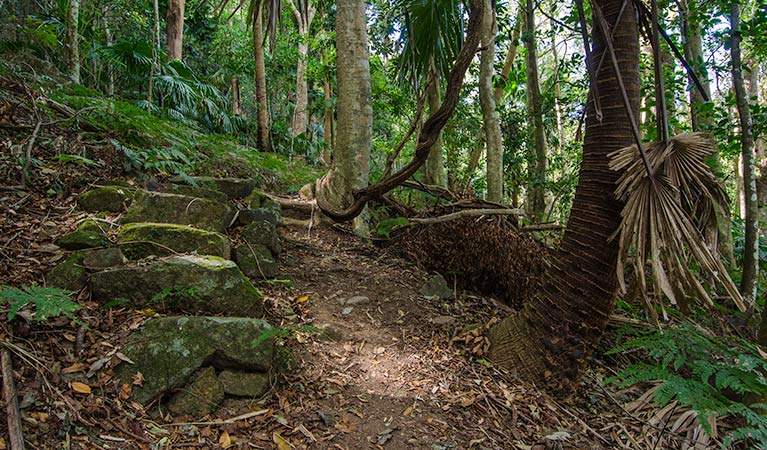 Wooded paths, Illawarra Escarpment State Conservation Area. Photo: John Spencer