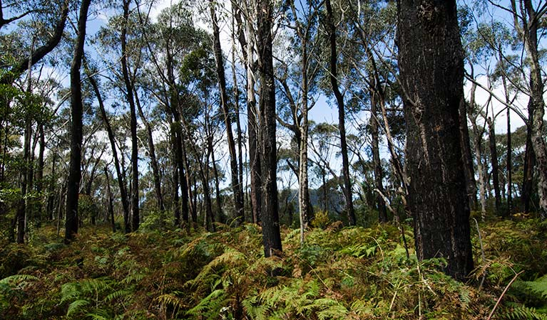 Forest, Illawarra Escarpment State Conservation Area. Photo: John Spencer